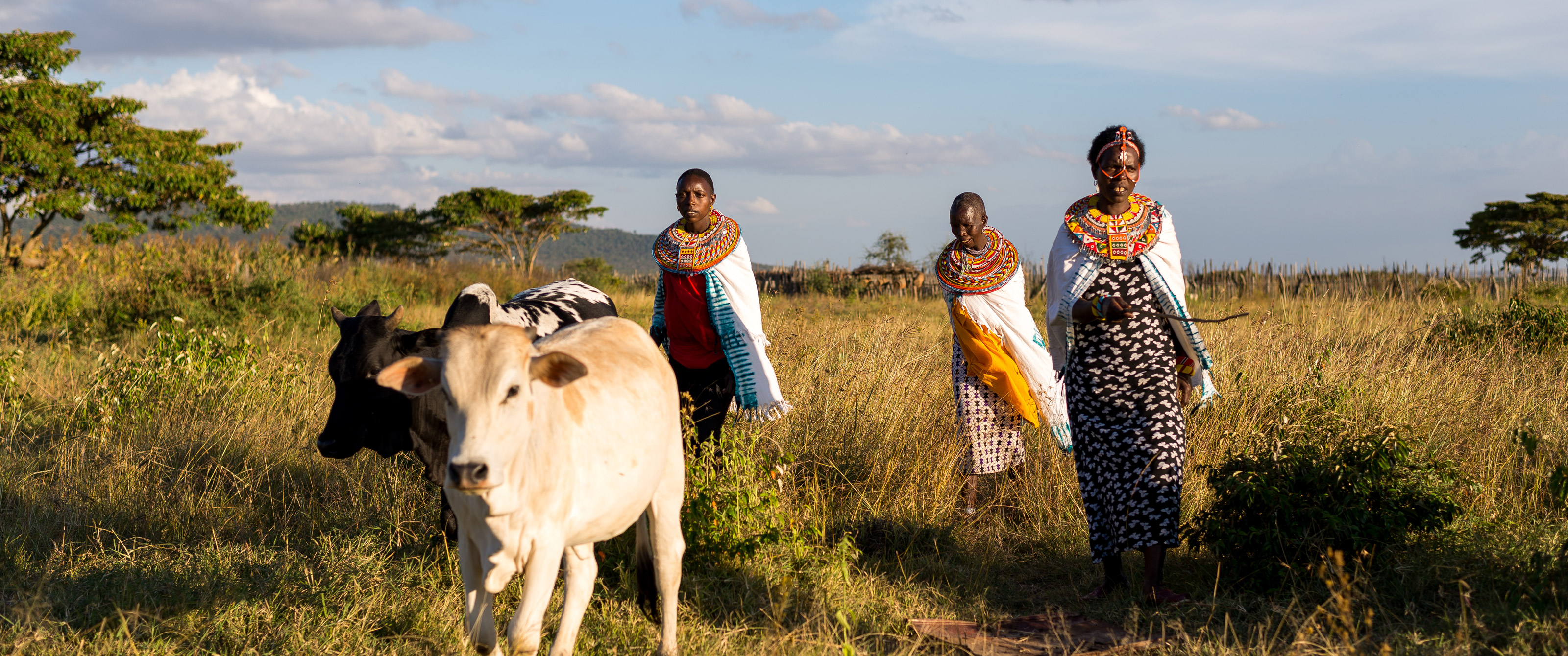 Cows and women in a field